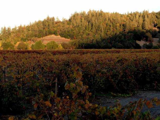 Talty Vineyards