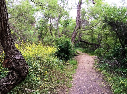 Guajome Park Hiking Trail