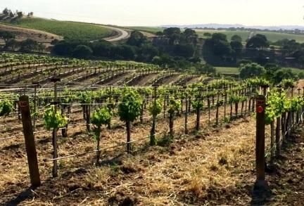 Paso Robles Vineyards