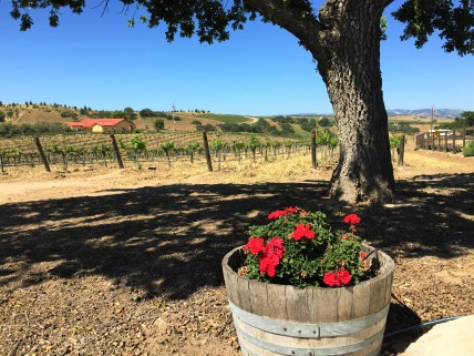 Rio Seco Vines and Geraniums