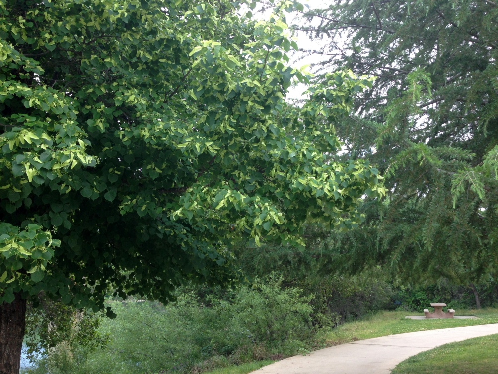 Bike Path Sac River Trail