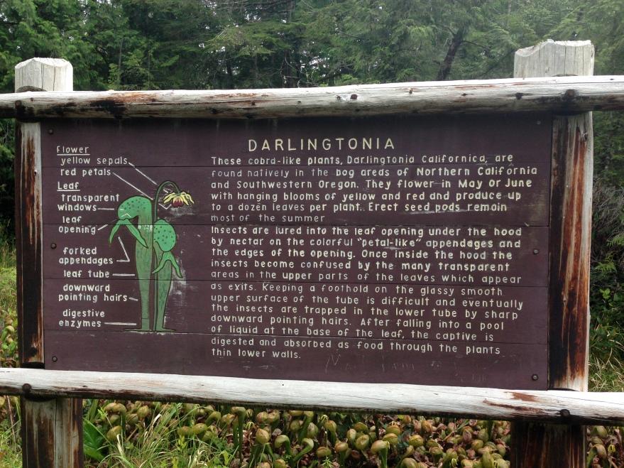 Dalingtonia Sign