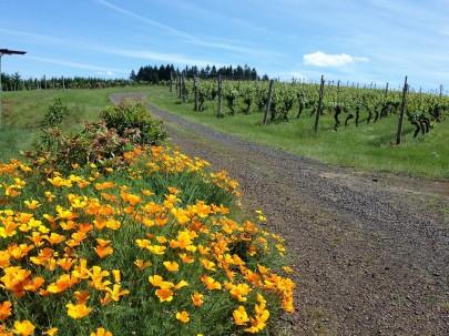 Marks Ridge Vines
