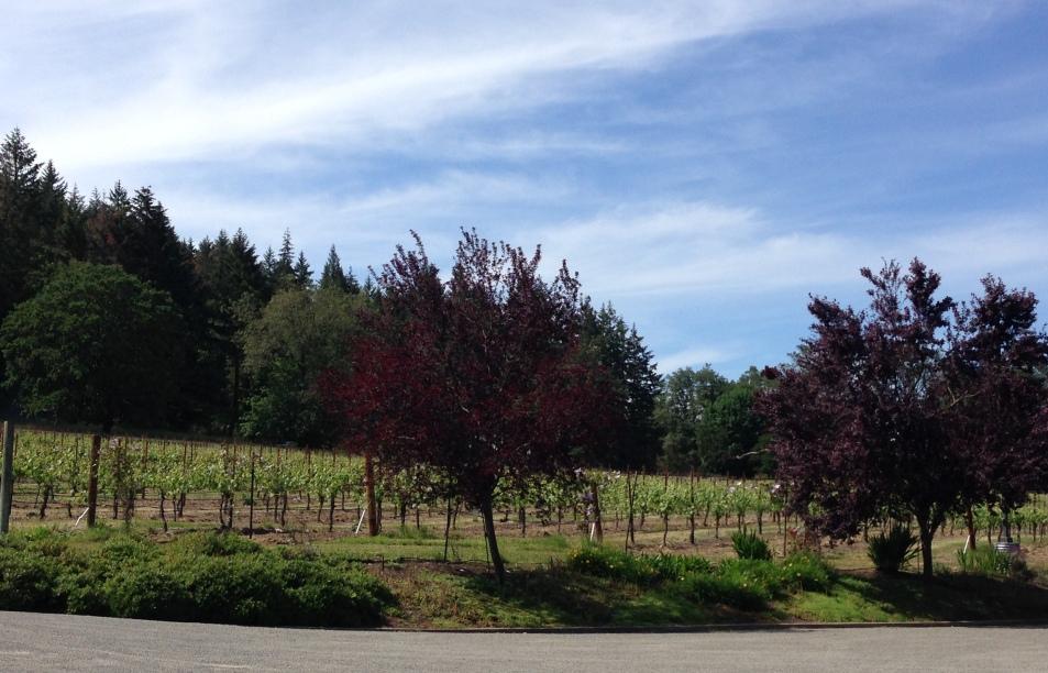 Melrose Vines