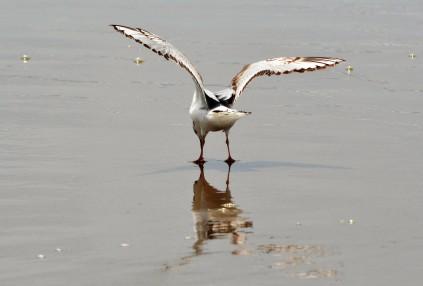 Seagull on beach at Cape Kiwanda