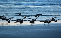 Seagulls in surf