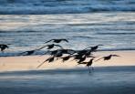 Seagulls landing Newport Beach