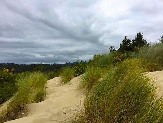 wind-swept-dunes