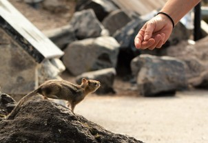 Hand out to Chipmunk