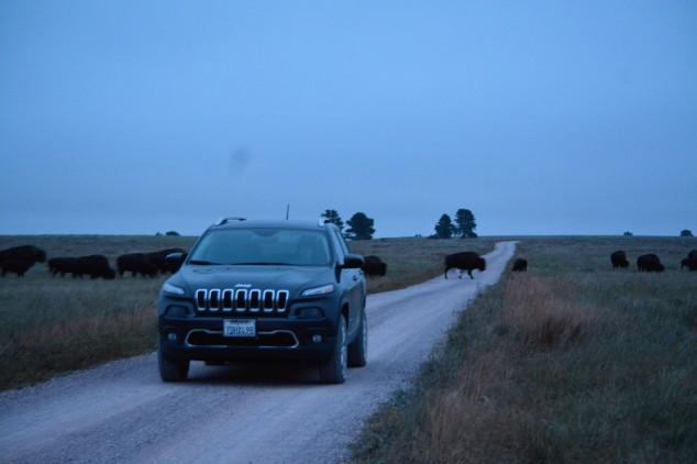 buffalo-herd-behind-us