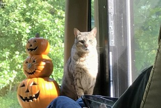 kato-pumpkins