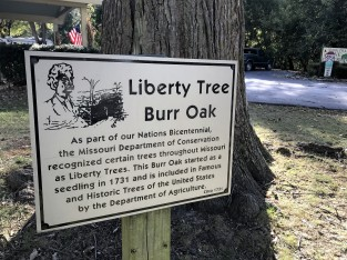 liberty-tree-sign