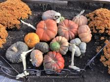 pumpkin-skeleton