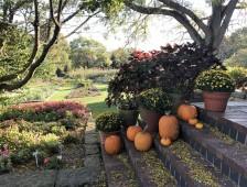 pumpkin-stairs