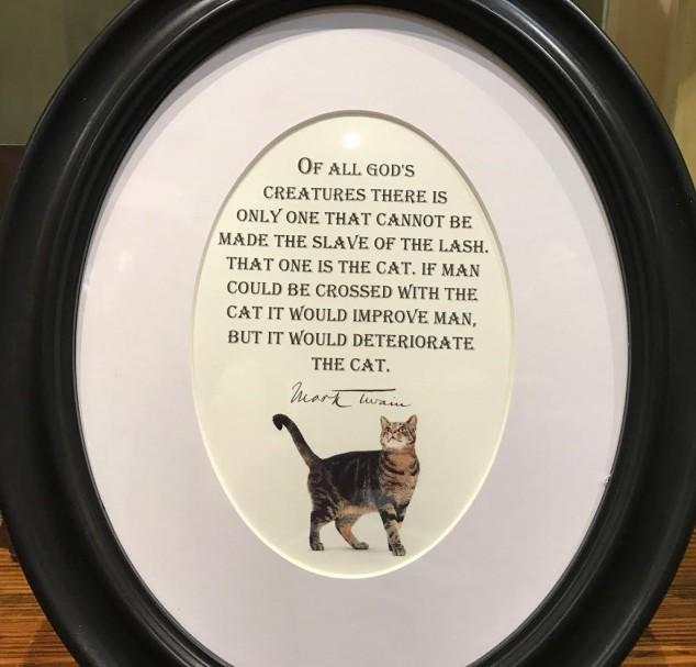 twain-cat