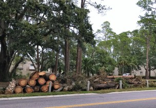 sea-pines-clean-up